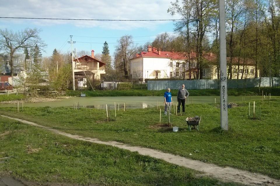 В поселке Красный посадили каштаны