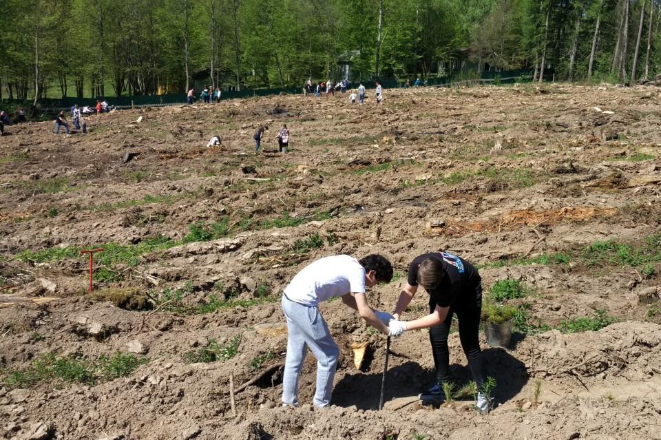 В Филатово посадили новый лес