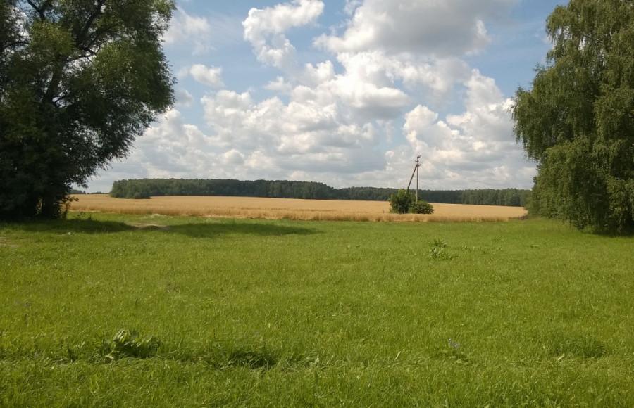 Территория усадьбы