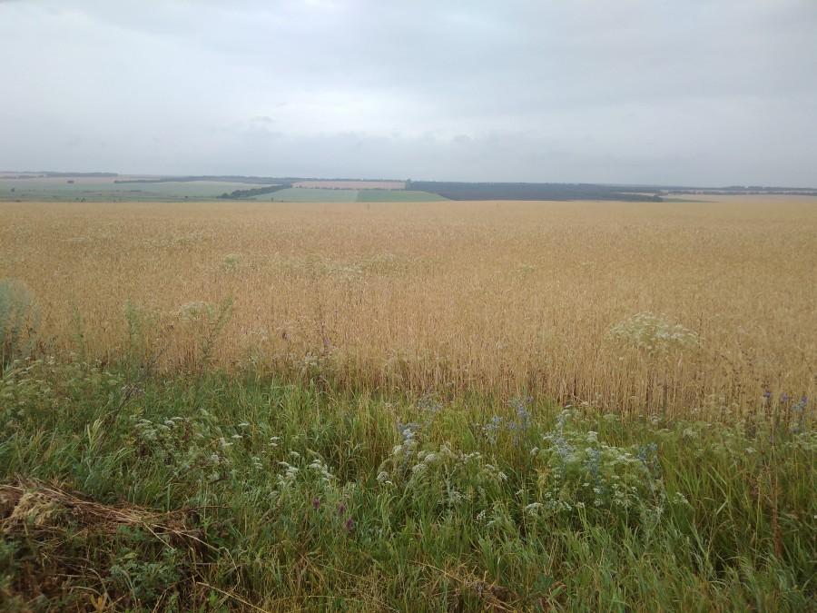 Поля недалеко от родового имения С.М. Волконского «Павловка»